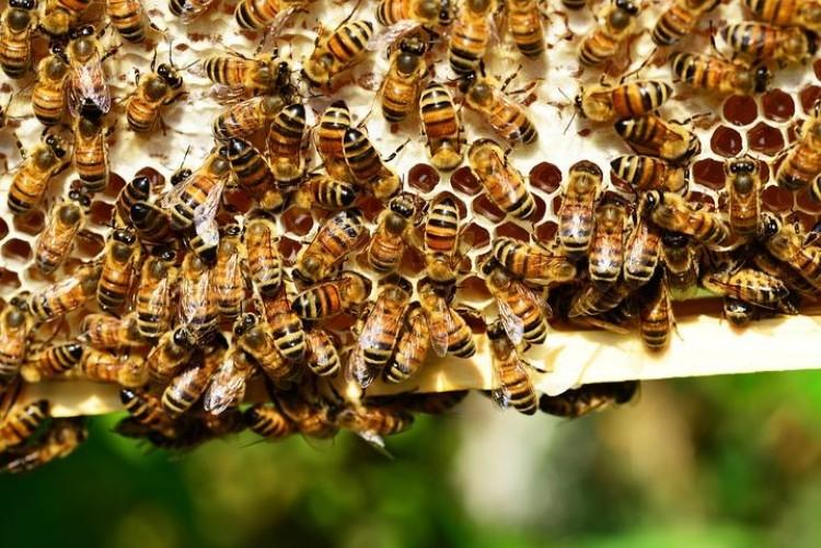 Méhkaptárok égtek Létavértesen