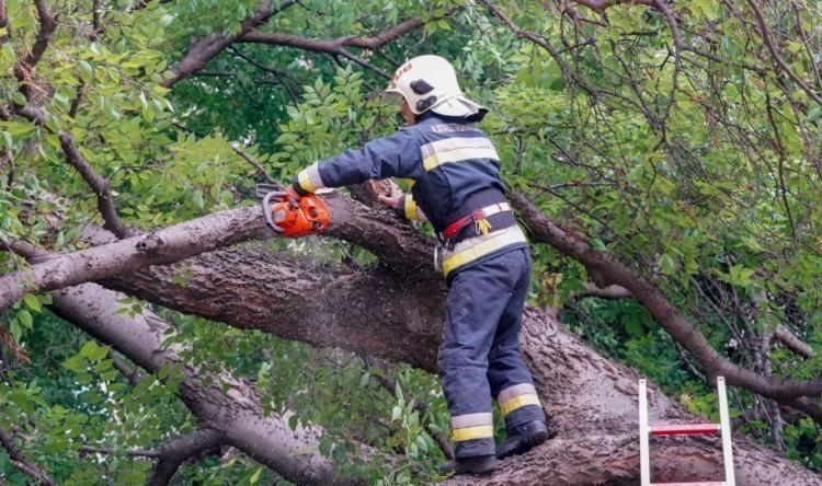 Autóra esett egy faág Debrecenben