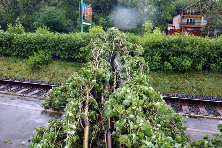 Fa dőlt Bocskaikertnél az InterCity mozdonyára