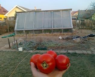 Agrárforradalom egy debreceni hátsó kertben!