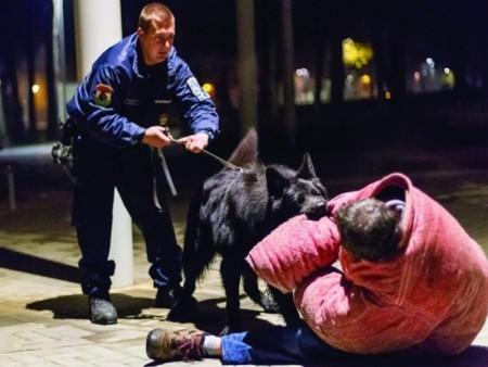 Futballhuligánokat fegyelmeztek – rendőrkutyával