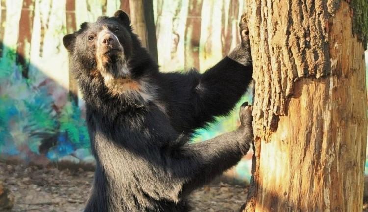 Lesse meg a medvét, van-e árnyéka!
