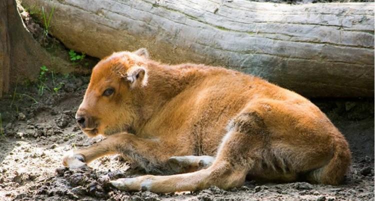 A Nyíregyházi Állatparknak új lakója van
