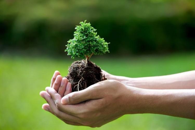 Gyermekeik tiszteletére ültetnek fát a nyíregyháziak