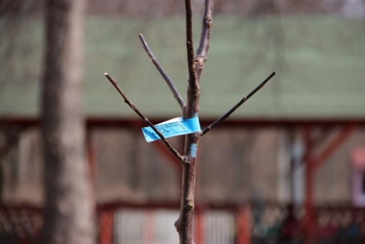 Ültessen fát a háza elé Nyíregyházán!