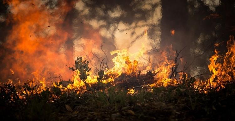 Hatalmas területen égett a nádas Újfehértón