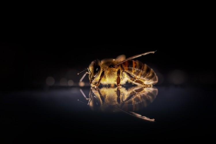 Jelenteni kell a méhpusztulást
