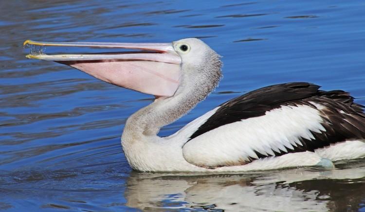 Pelikánoknak, flamingóknak épül medence Nyíregyházán