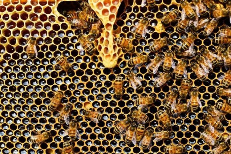 Méhegészségügyi zárlatot rendeltek el Fehérgyarmat egy részén