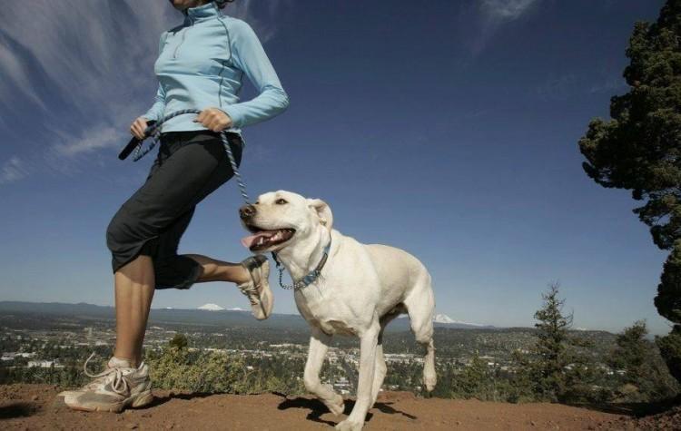 Nyíregyháziak futnak az állatokért