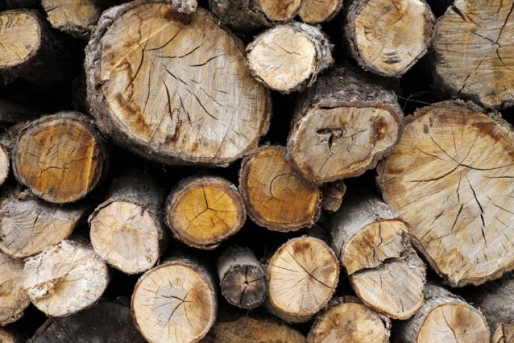 Letöltendőt kaptak Nyíregyházán a csaló fakereskedők