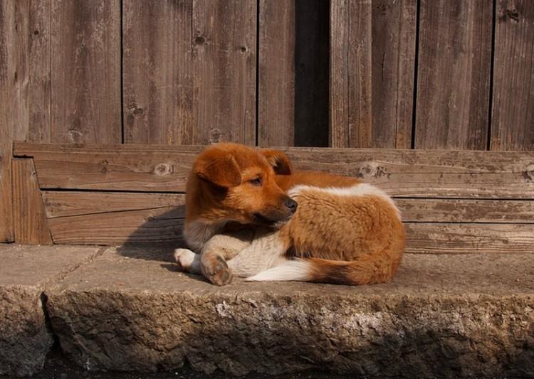 Nagy bajba került egy kutya Tiszabecsen