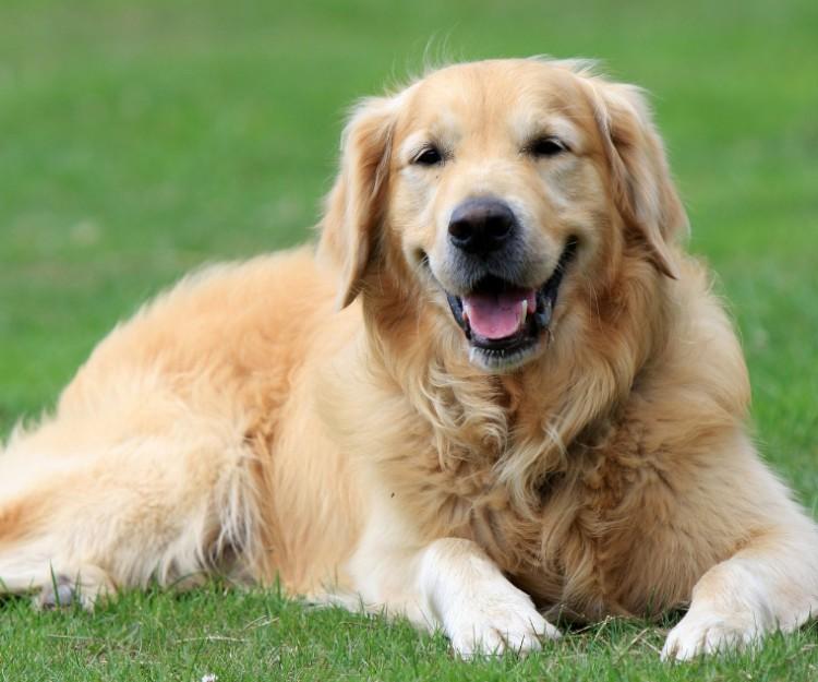 Nyíregyházán ingyen ivartalanítják a kutyákat