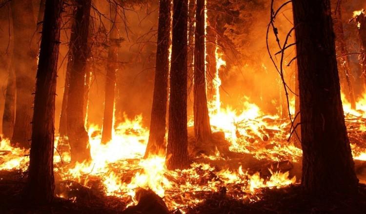 Erdőtűz Nyírmihálydiban