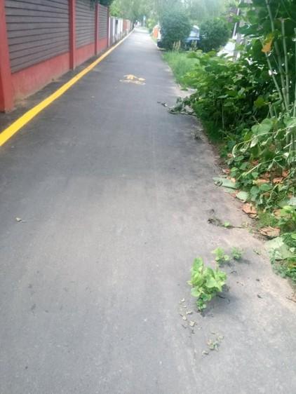 Kizöldült a bicikliút Nyíregyházán