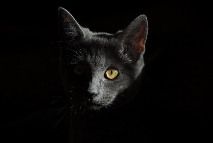 Szorult helyzetbe került macskát mentettek Nyíregyházán