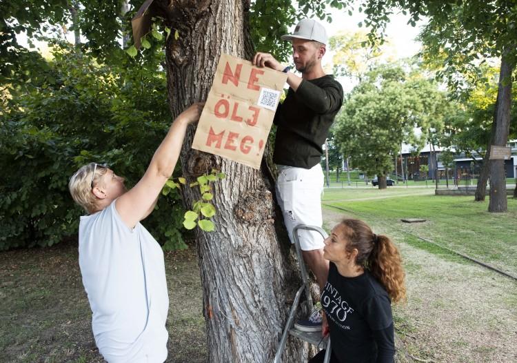 Nyíregyháziak megakadályoznák a sóstói fák kivágását