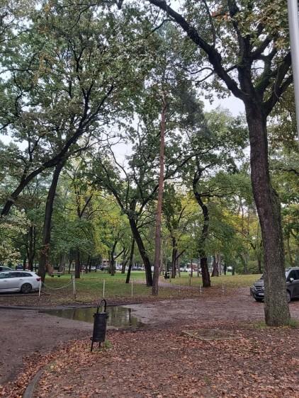 Betonstop! Sóstó fáiért demonstráltak a nyíregyházi zöldek