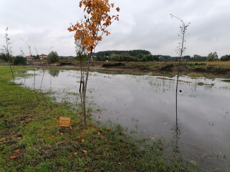 Vízben állnak, pusztulnak az újéletfák Nyíregyházán