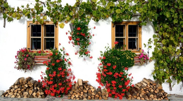 Virágföldet kapnak a nyíregyháziak