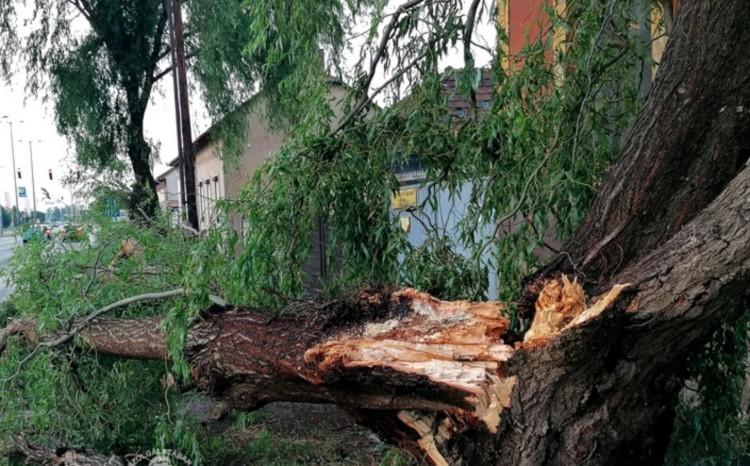 Orkán: 121 kilométer per órával fújt a szél Tiszavasváriban