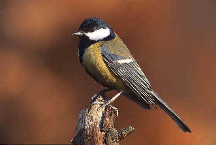 Meglesheti a madarakat Cégénydányádon