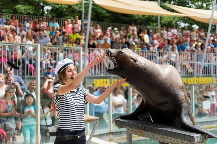 Különleges napra készülnek a Nyíregyházi Állatparkban