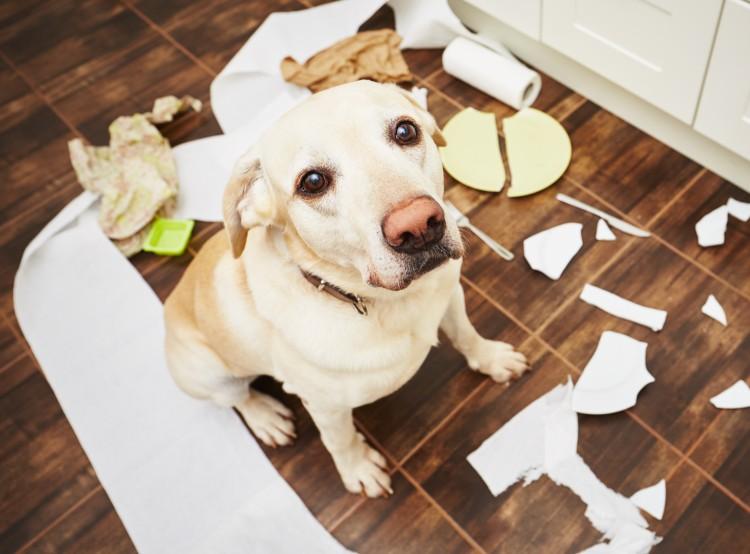 Jogosítványt szerezhetnek a kutyatartók